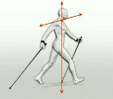 technical ALFA What Is Nordic, Benefits Of Walking Daily, Walking Poles, Nordic Walking, Walking Exercise, Rando, Low Impact Workout, Nova Scotia, South Africa