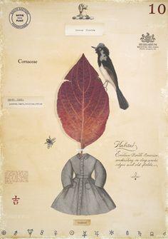 Dogwood with Dress – MF Cardamone
