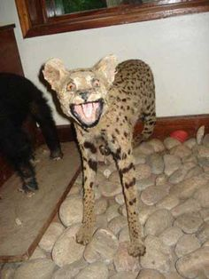 19 Photos of Bad Animal Taxidermy