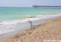 Venice Dog Beach - Pet Friendly Real Estate in Sarasota County, Florida