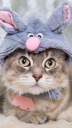 Kitten Wallpaper, Bird Wallpaper, Animal Wallpaper, Iphone Wallpaper, Animal Jokes, Funny Animals, Cute Animals, Funny Cats, Funny Animal Photos