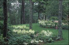 Edmund Hollander Landscape Architects | In The Woods