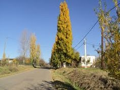 Panoramio - Photo of Drumul spre casa