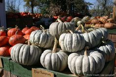 I love Fairytale, Cinderella, Casper & Sweet Meat pumpkins. Sometimes we grow pumpkins here, but Grandpa grows them at his farm so we often use the space for growing other vegetables.