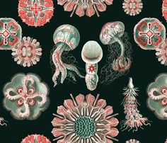 Assorted Ernst Haeckel fabulous jellyfish pattern on a rich black background by Jellymania