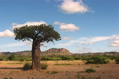 Vhembe Biosphere Reserve | Nwanedi Park baoabab World Heritage Sites, South Africa, Landscapes, Country Roads, Park, Paisajes, Scenery, Parks