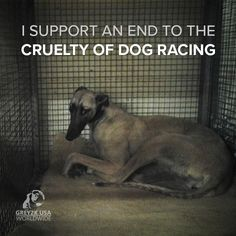 Help Animals and stop the pain from Animals that have to do Dog Racing! Please don't finance heartbreaking violent animal cruelty. Know the truth. Please help me save the Animals - Tap the pin for the most adorable pawtastic fur baby apparel! You'll love the dog clothes and cat clothes! <3