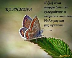 Good Morning, Wisdom, Quotes, Beautiful, Decor, Buen Dia, Quotations, Decoration, Bonjour