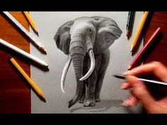 Graphite Drawing of an Elephant - Speed Draw   Jasmina Susak