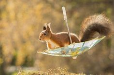 Photographer Makes a Living Taking Adorable Photos of Squirrels in His Backyard