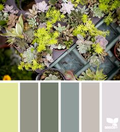Design Seeds celebrate colors found in nature and the aesthetic of purposeful living. Colour Pallette, Colour Schemes, Color Patterns, Color Combinations, Paleta Pantone, Living Colors, Color Harmony, Design Seeds, My Living Room