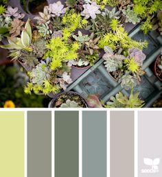plant hues