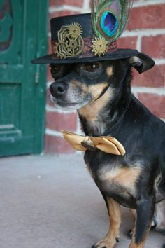Steampunk and clockwork devices have gone to the dogs - and it's about time! Two of my favorite things - dogs and steampunk! Mode Steampunk, Steampunk Hat, Steampunk Wedding, Steampunk Costume, Steampunk Fashion, Steampunk Animals, Suki, Chihuahua Love, Pet Costumes