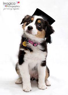 Puppy school gold coast