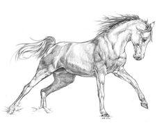 Ideas for drawing lapiz horse - Pferd Horse Drawings, Realistic Drawings, Animal Drawings, Art Drawings, Drawing Art, Animal Sketches, Art Sketches, Horse Sketch, Horse Anatomy