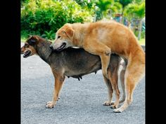 1000+ images about Animals Mating on Pinterest | Watches ...