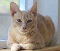 My cat Jax. Becca, Yelm, WA. 4/22/14.