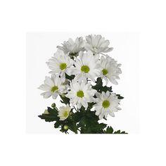 Alvéolé blanc - livraison fleurs coupées - France Fleurs