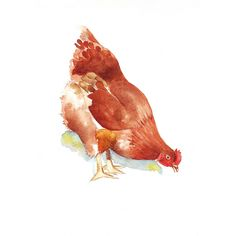 Chicken watercolor Painting - print of watercolor painting - 5 by 7 print. $15.00, via Etsy.