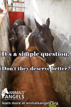 """Animals Angels on Twitter: """"See the true face of horse slaughter. Be their voice…"""