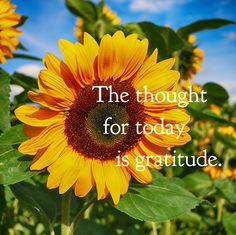 """DAY 16 Feb. 14: The thought for today is GRATITUDE. On her show, Oprah Winfrey frequently promotes the daily practice of gratitude. """"Gratitude unlocks the fullness of life. It turns what we have in..."""