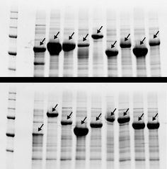 Computer program scrambles genetic codes for production of repetitive DNA and synthetic molecules