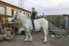 Colour Images, Joseph, Irish, Pony, Around The Worlds, Horses, Animals, Color, Instagram