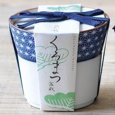 Black Pine Bonsai Kit
