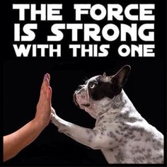 'The Force is Strong with this One', French Bulldog and Star Wars❤️