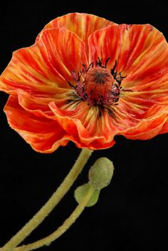 """Natural Touch 25"""" Poppy Orange & Yellow (flower 5"""" width) Flowers $8.99 each / 3 for $7 each"""