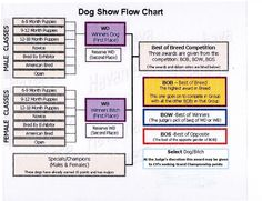 UKC dog show class flow chart Lagotto Romagnolo, Art Poses, Action Poses, Dog Show, Whippet, Pose Reference, Bullying, Dog Training, Animals And Pets