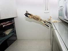 animals cats