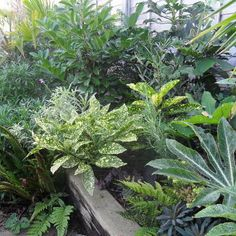 Tropical Plants you can use to Create a UK Hardy Exotic Paradise plants flowers plants ideas plants landscaping plants perennials plants uk plants vegetable Tropical Plants Uk, Small Tropical Gardens, Tropical Landscaping, Exotic Plants, Garden Landscaping, Garden Border Plants, Garden Borders, Small Space Gardening, Garden Spaces