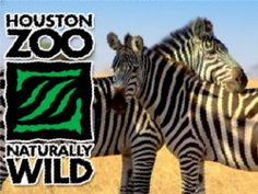Couponsforthezoo.com has a great deal on admission to the Houston Zoo as well as many other attractions around town.  Don't miss out!