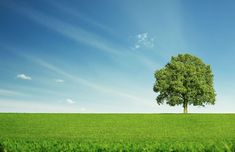 Photo about Lonely tree at the empty green field with copy space. Image of lawn, peaceful, meadow - 34718407 Clover Plant, Indian Flag Wallpaper, Indigo Plant, Tree Company, Green Fields, Home Landscaping, Home Ownership, Nature Images, Stand Tall