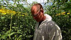 Door het slim inzetten van  technologisch innovaties en datamining applicaties kunnen met de Scoutbox schadelijke insecten in de groente- en fruitteelt snel en makkelijk geïdentificeerd en geteld  worden. Een innovatie door Cropwatch ingeschreven voor de MKB Innovatie Top 100 http://www.mkbinnovatietop100.nl/site/inschrijving-2015-Cropwatch