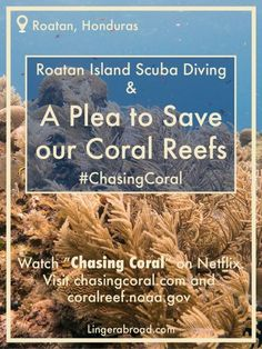 Roatan Island Scuba Diving and a plea to save our coral reefs #chasingcoral