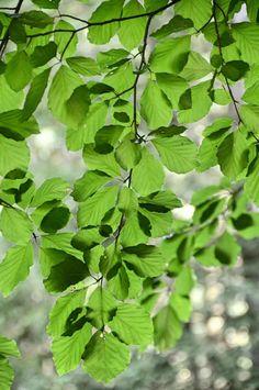 Leaves by gun.hjortryd