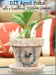 CUTE!!!!! DIY Aged Pots with a Transfered Vintage Image by virginisweetpea.com