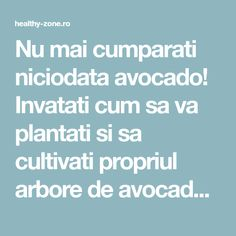 Nu mai cumparati niciodata avocado! Invatati cum sa va plantati si sa cultivati propriul arbore de avocado cu fructe nelimitate! - Healthy Zone Avocado, Fruit Trees, Grape Vines, Good To Know, Container Gardening, Home And Garden, Agriculture, Plant, Florals