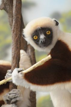 Dear visitor / Right at the beginning of the new millennium I got infected by the photo-virus. / I started by taking pictures of sports events and I enjoyed it a lot. Bronx Zoo, Lemurs, Primates, Wild Life, Monkey, Beast, Cute Animals, October, York