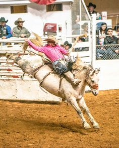 Bareback rider at Fort Worth Stock Show Rodeo Fort Worth Stock Show, Show Cattle, Photography Contests, Show Horses, Livestock, Rodeo, Country Style, Camel, Animals