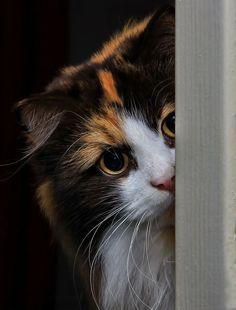 "theperfectworldwelcome: "" crescentmoon066: "" Peek-a-boo by Jane Bjerkli on 500px "" Beautiful !!! \O/ """
