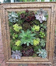 Vida suculenta quer aprender como fazer um quadro vivo ou - Decoration mur exterieur jardin ...