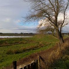 #Bokkengat #lovezeeland #fanvanzeeland #zeeland #wandelen #genieten #vrijetijd #natuur #wissenkerke #lovenature #gooutside #nature #outdoors #netherlands #polder #omroepzeeland #zeelandismooi