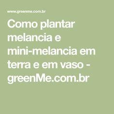 Como plantar melancia e mini-melancia em terra e em vaso - greenMe.com.br
