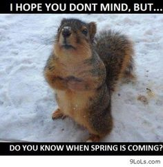animal images with sayings | ... pictures, funny quotes, funny kids, quotes and sayings, funny animals