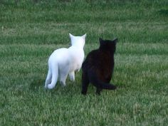 Cute Little Animals, Baby Animals, Funny Animals, Cat Couple, Cat Aesthetic, White Cats, Pretty Cats, Cat Love, Cats And Kittens