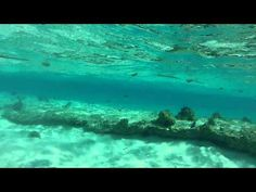 Snorkeling in Rocky Cay, San Andres Island - Colombia. - http://www.nopasc.org/snorkeling-in-rocky-cay-san-andres-island-colombia/