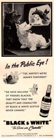 Chiens 'Whisky Black & White' - Publicité Vintage - 1951